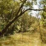 3 de marzo: Día Mundial de la Vida Silvestre. ¿Cómo sería un día sin naturaleza?