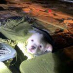 """La crueldad animal de las """"cajas misteriosas"""" de China"""